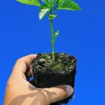 Sapling in soil in a persons hand
